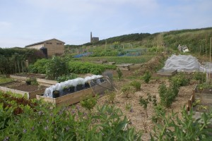 Kenidjack Allotments
